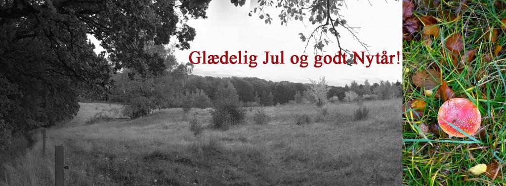 Doggerland Design garnbutik i Jægerspris og webshop